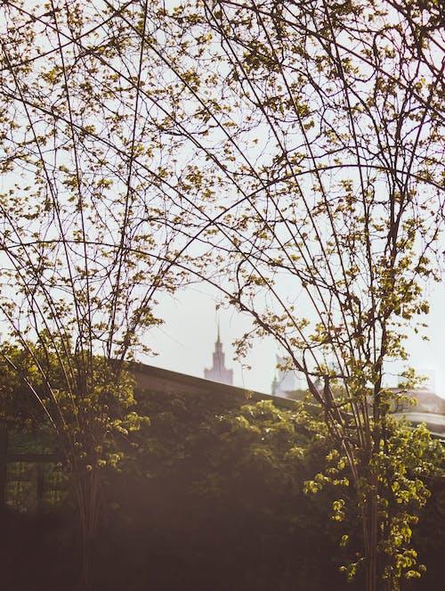 Free stock photo of botanic, city, garden, leaves