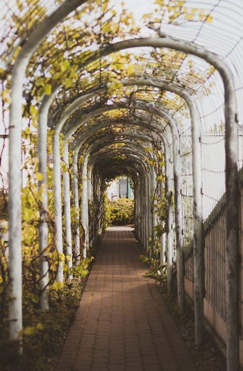 Gratis lagerfoto af blade, botanisk, buer, dagslys