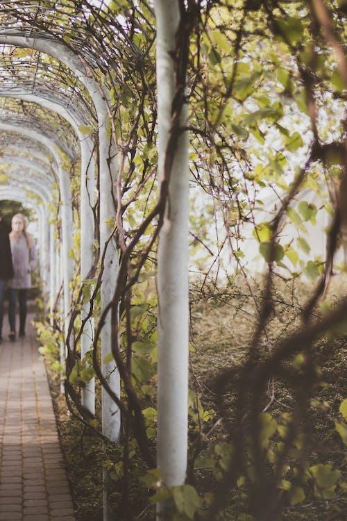 Free stock photo of botanic, garden, leaves, urban