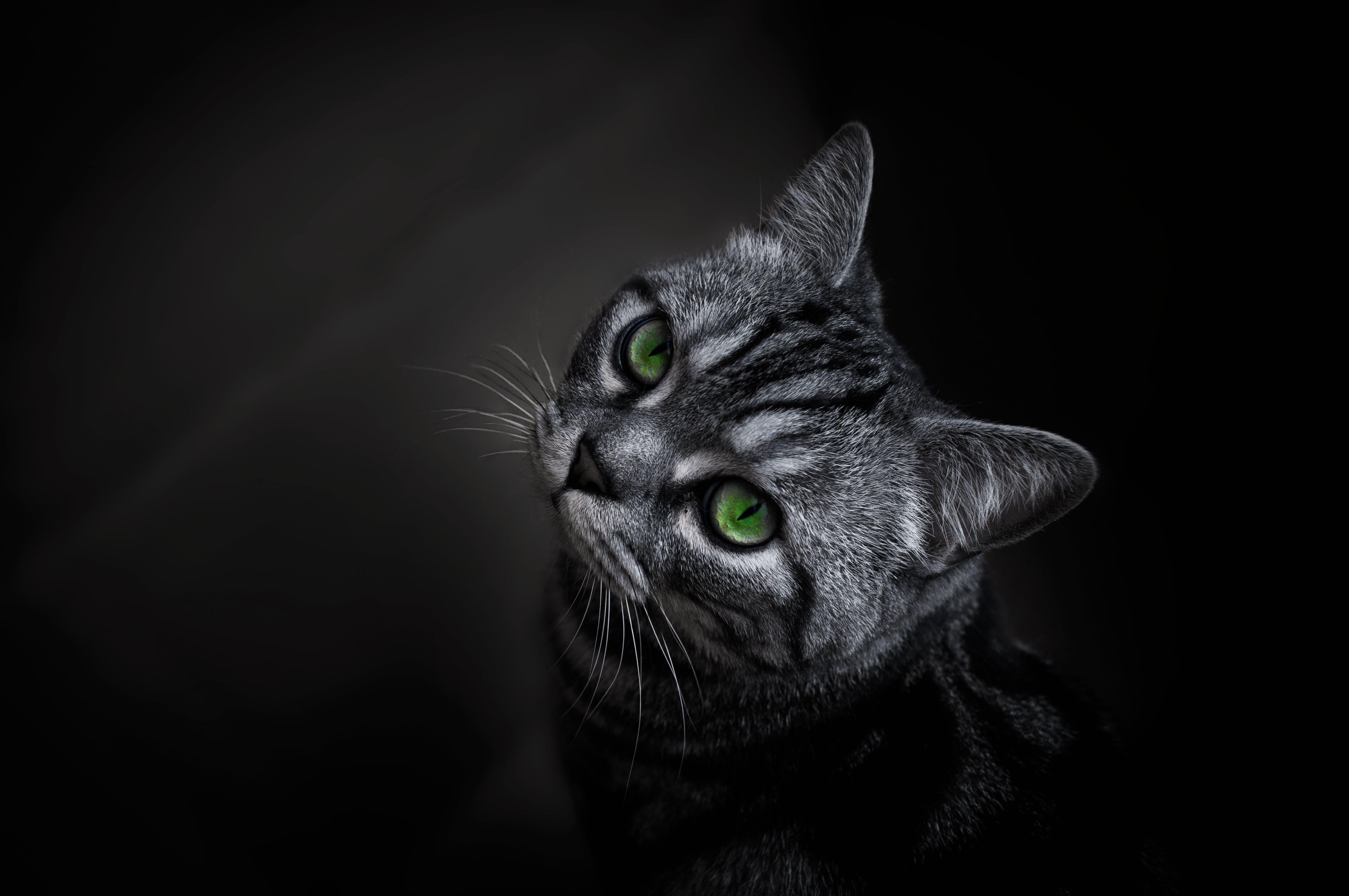動物攝影, 可愛, 可愛的, 哺乳動物 的 免费素材照片
