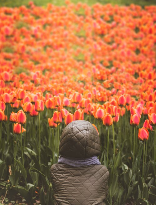 Fotobanka sbezplatnými fotkami na tému farba, farebný, flóra, hracie pole