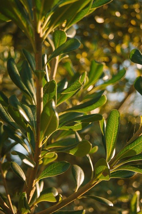 Darmowe zdjęcie z galerii z liść, liście, natura, światło słoneczne