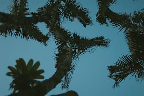 Darmowe zdjęcie z galerii z #natura, błękitne niebo, drzewa