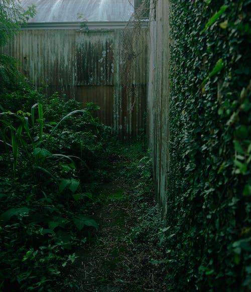 Darmowe zdjęcie z galerii z #natura, zielony