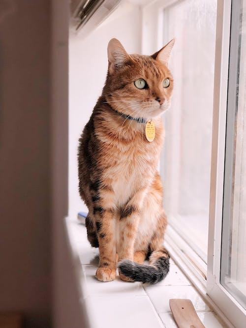 Δωρεάν στοκ φωτογραφιών με αξιολάτρευτος, βλέπω, Γάτα, γατάκι