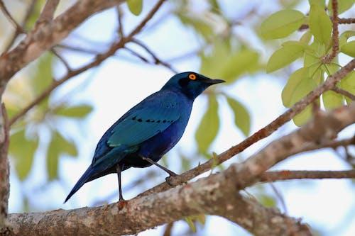 Ilmainen kuvapankkikuva tunnisteilla lintu