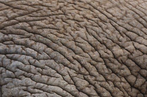 Ilmainen kuvapankkikuva tunnisteilla norsun iho
