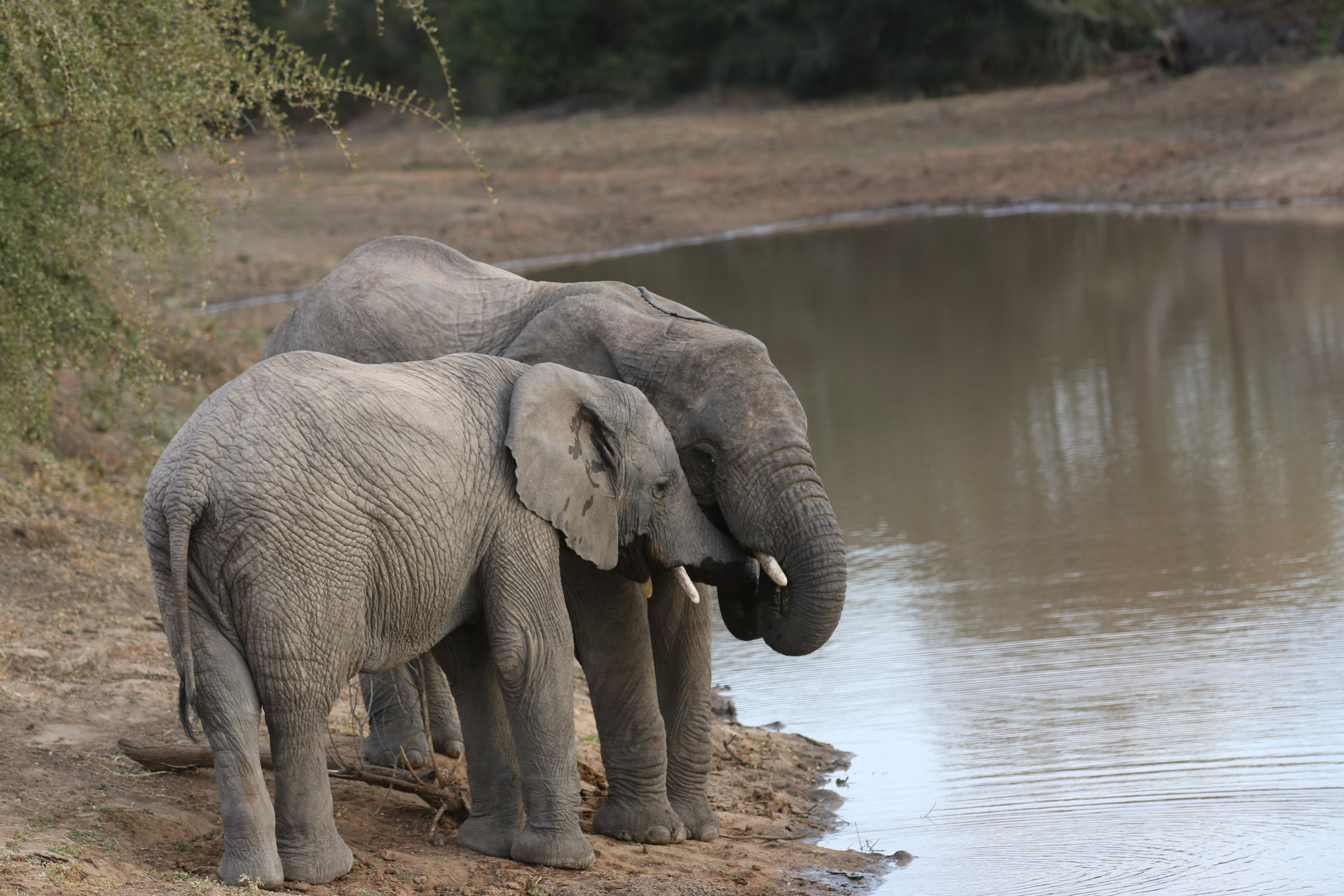 Foto stok gratis Afrika, alam, badan air, batang pohon