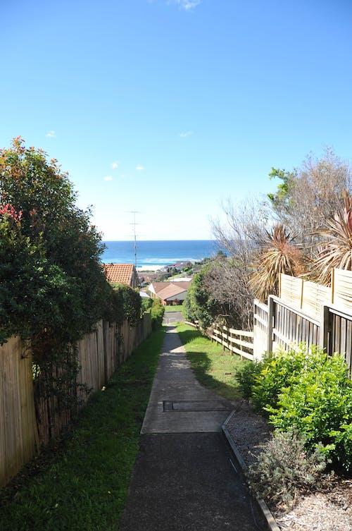 ağaçlar, Avustralya, Bahçe, çatılar içeren Ücretsiz stok fotoğraf
