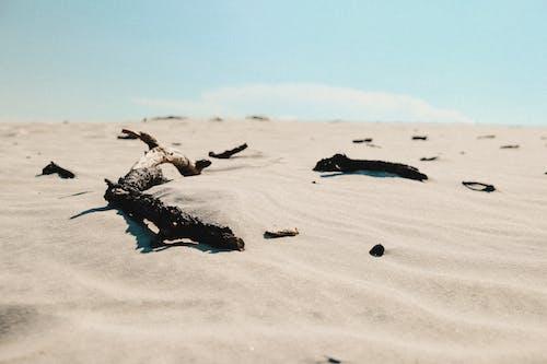乾的, 分公司, 沙漠, 白沙 的 免费素材照片