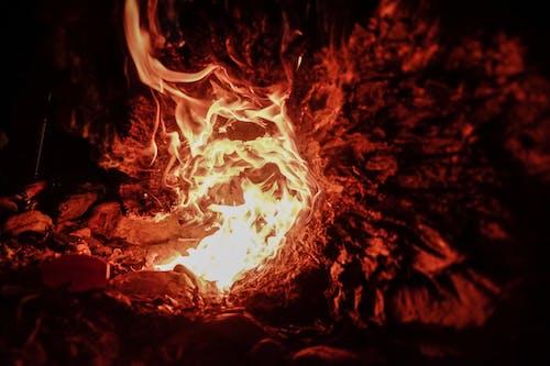 Foto profissional grátis de ardente, dentro, fogo, lenha