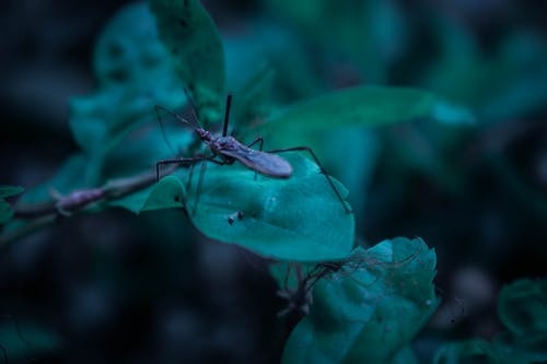 Free stock photo of bug, nature, wildlife photography