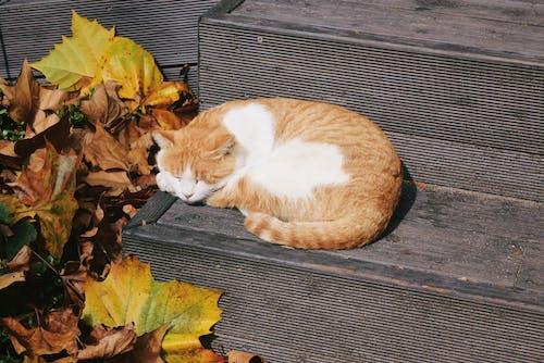 Kostnadsfri bild av katt