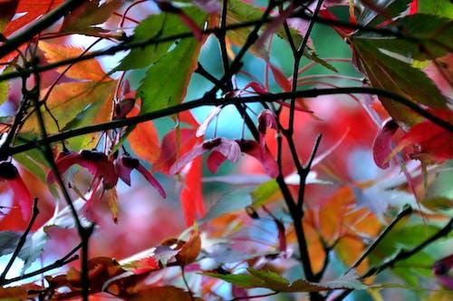 Foto stok gratis cabang, daun, Daun-daun, musim gugur