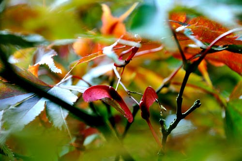 Free stock photo of autumn, autumnal, colorful, colors