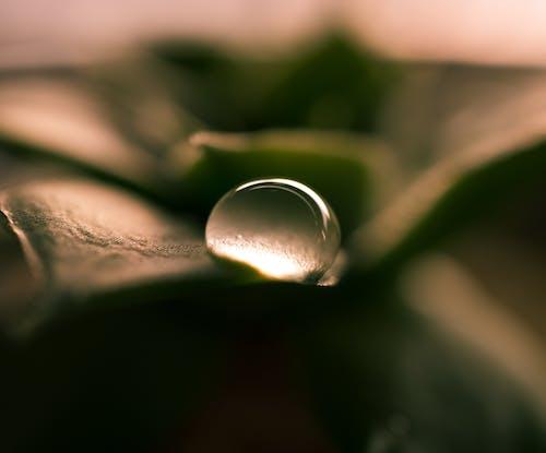 Ingyenes stockfotó csepegés, csepp, cseppecske, eső témában