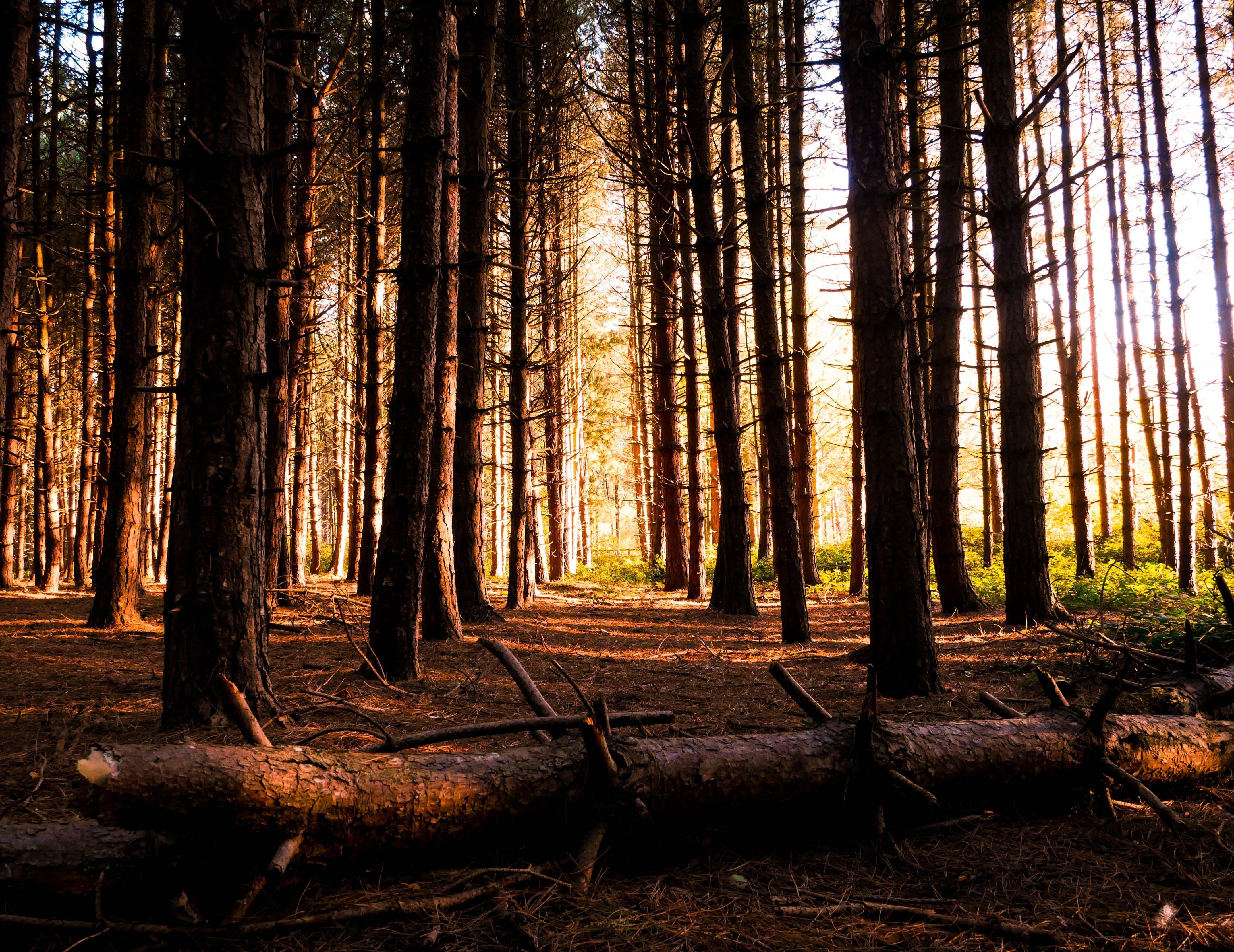 Kostenloses Stock Foto zu Äste, bäume, baumstamm, friedvoll