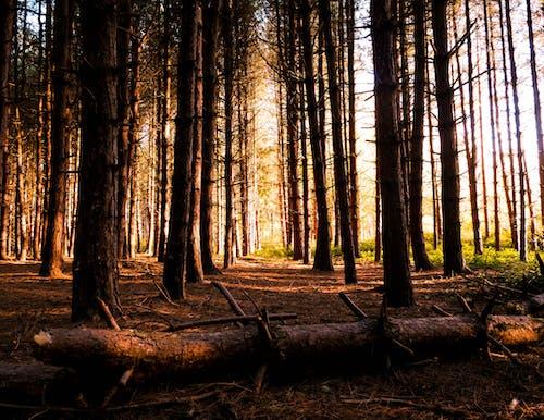 Бесплатное стоковое фото с ветви деревьев, деревья, живописный, идиллический
