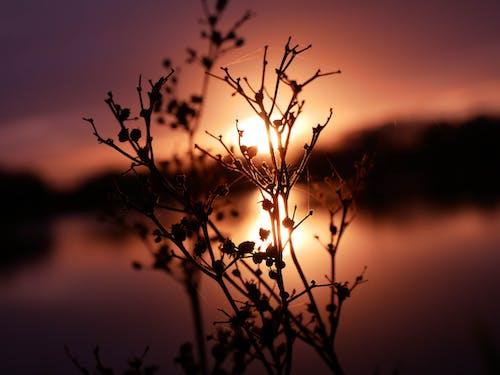 Бесплатное стоковое фото с завод, закат, зима, листья