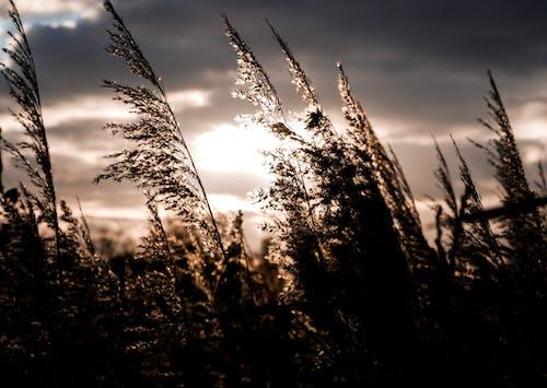 Kostenloses Stock Foto zu dunkel, feld, kontrast, natur