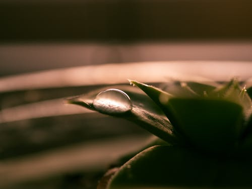 Free stock photo of drip, drop, droplet