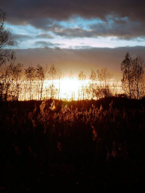 Free stock photo of dusk, glow, nature
