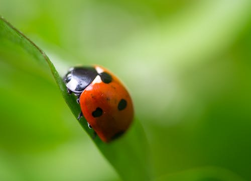Free stock photo of beetle, coccinellidae, grass