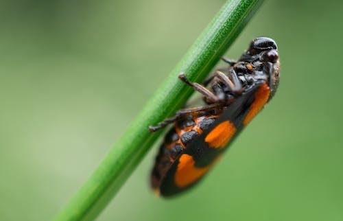 Free stock photo of beetle, bug, grass