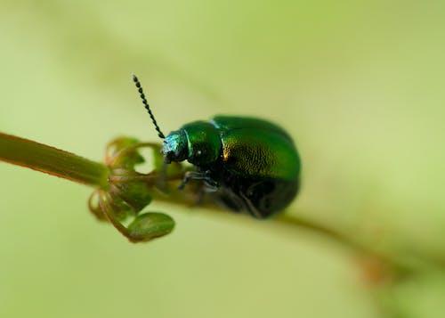 Free stock photo of beetle, bug, flower beetle