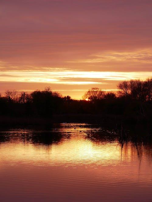 Free stock photo of duck, ducks, lake