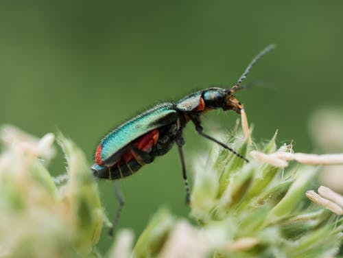 Бесплатное стоковое фото с beetle, максросъемка, насекомое, природа
