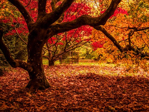 Free stock photo of autumn, autumnal, leaves, nature