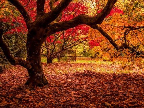 Бесплатное стоковое фото с листья, осенний, осень, природа