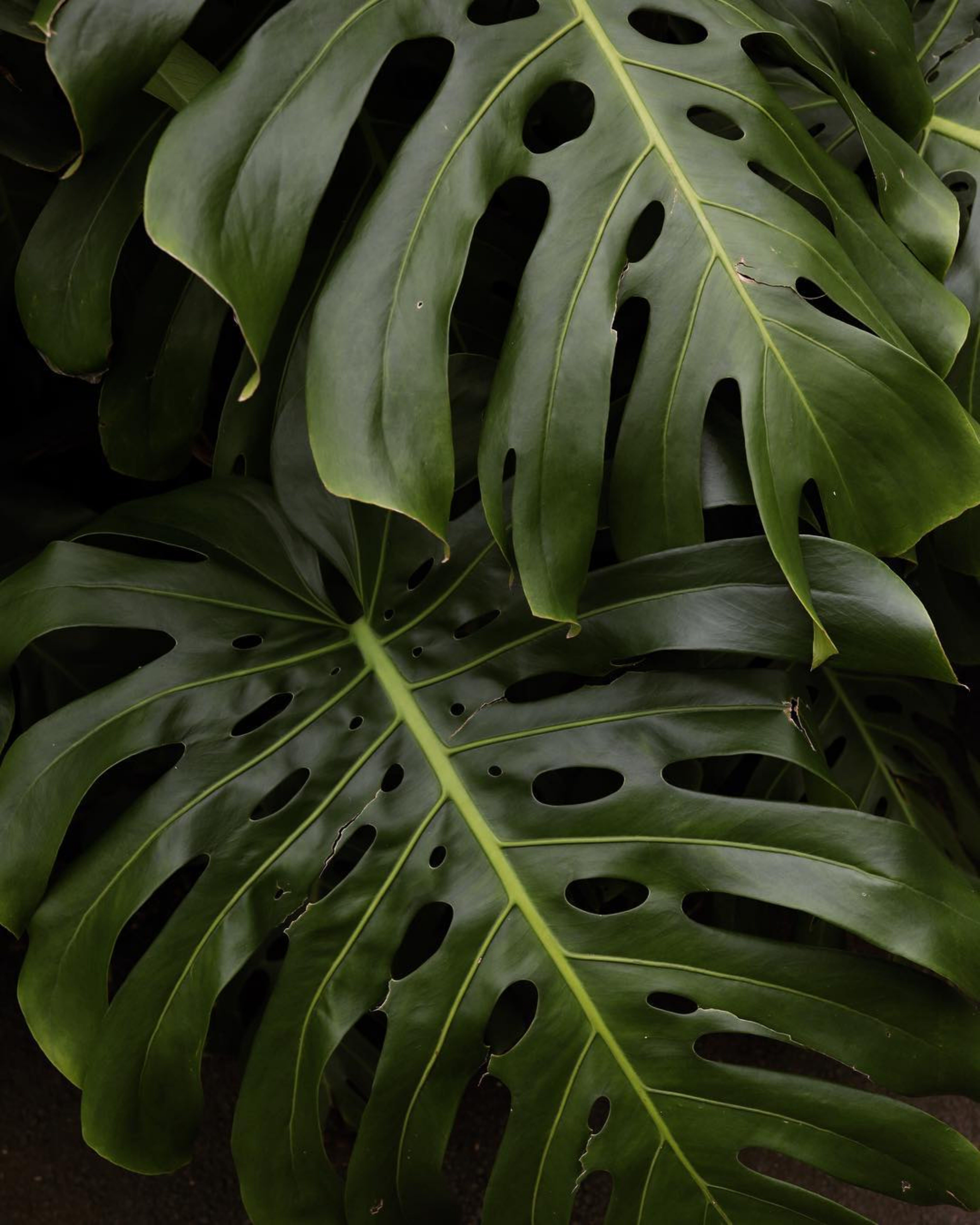 Ingyenes stockfotó beltéri növények, botanikus, friss, frissesség témában