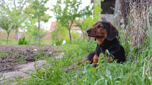 小狗, 巴爾幹斯基, 狗 的 免費圖庫相片