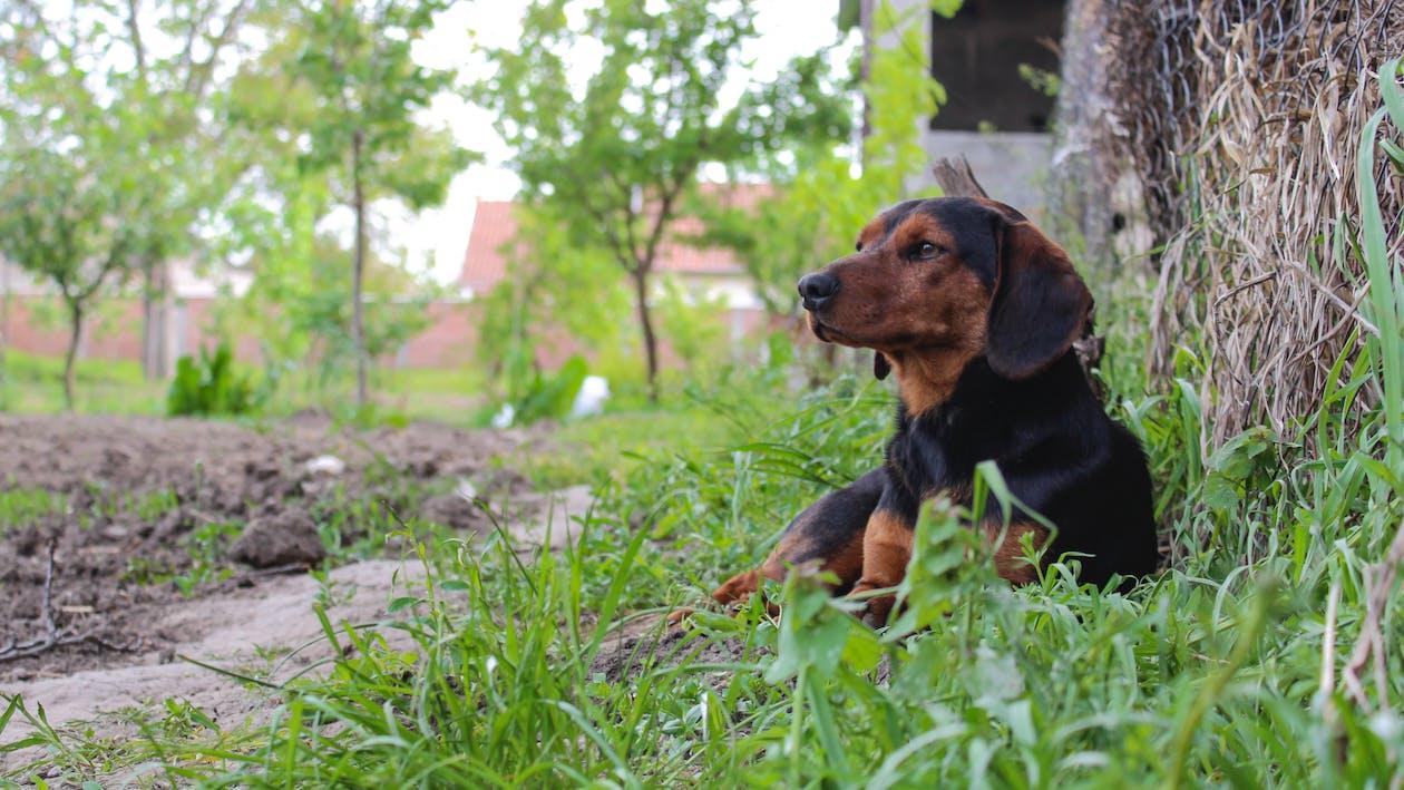 Fotos de stock gratuitas de balkanski gonic, perro, perros