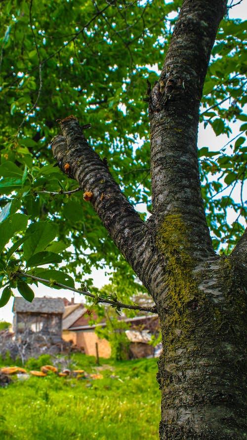 天性, 村莊, 樹 的 免費圖庫相片
