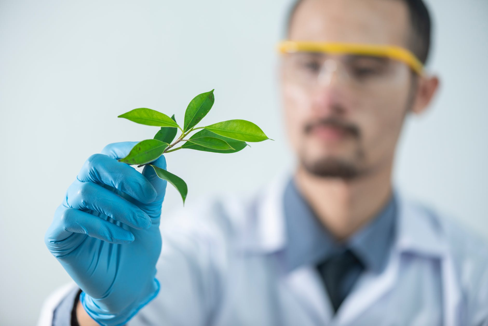 Male scientist examining plant