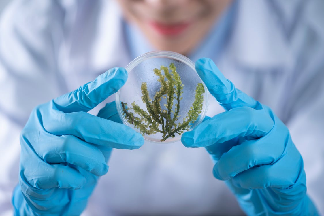 Stock photo of researcher holding plant sample