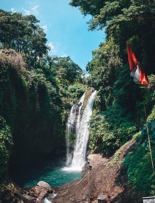 Foto d'estoc gratuïta de a l'aire lliure, aigua, arbre, cascada