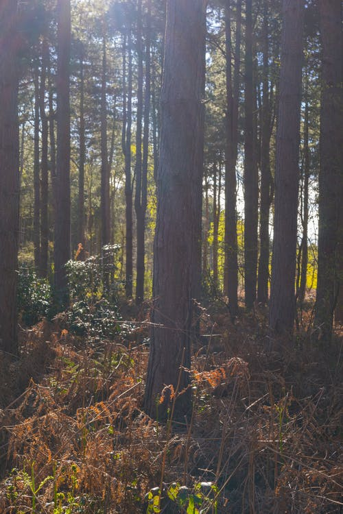 Free stock photo of ferns, nature, nature trail