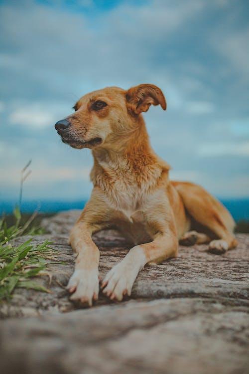 개, 개의, 동물, 동물 사진의 무료 스톡 사진