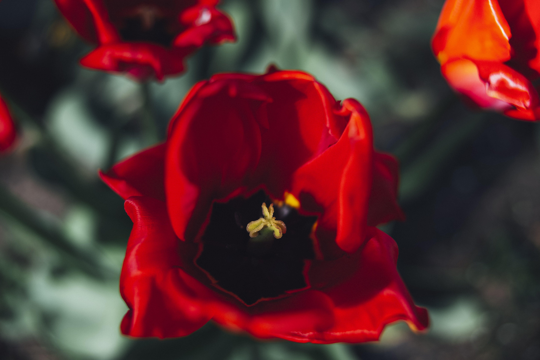 Základová fotografie zdarma na téma barevný, barva, barvy, blaze barvy