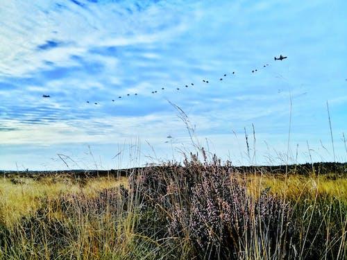 Foto profissional grátis de aeronave, arbusto, avião militar, campina