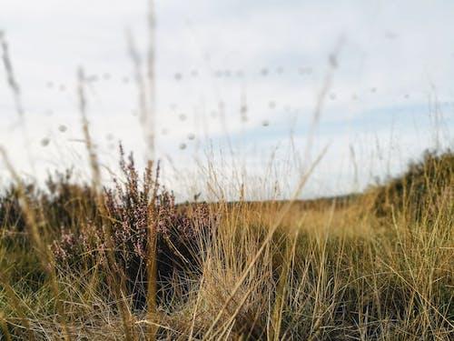 Foto profissional grátis de arbustos, campina, grama, horizonte