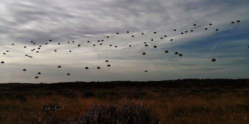 Foto profissional grátis de arbustos, campina, horizonte, paraquedas