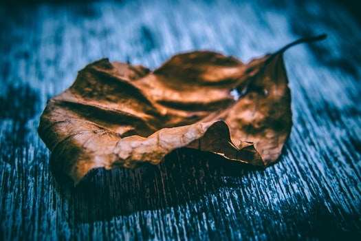 Close Up Photo of Dried Leaf