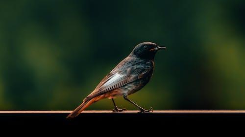 Kostnadsfri bild av bakgrund, djur, fågel, fåglar