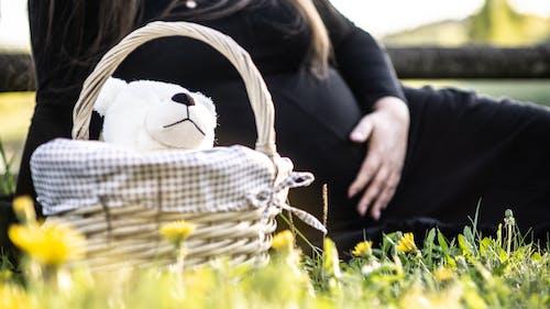 คลังภาพถ่ายฟรี ของ ตะกร้า, ตั้งครรภ์, ตุ๊กตาหมี, ปิกนิก