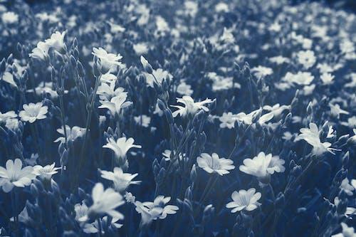 Photos gratuites de centrales, coucher de soleil, été, fleur
